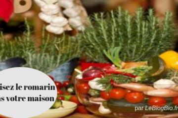 Utilisez le romarin dans votre maison (cuisine, ménage)