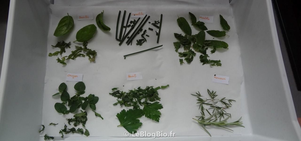 Comment conserverr vos plantes naturellement
