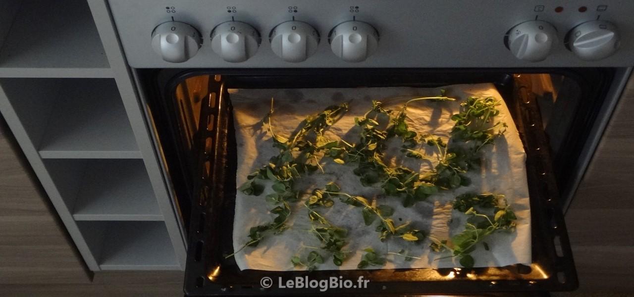 Sécher vos plantes au four