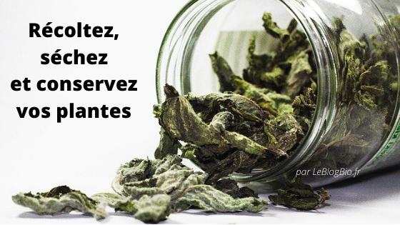 Récoltez, séchez et conservez vos plantes aromatiques