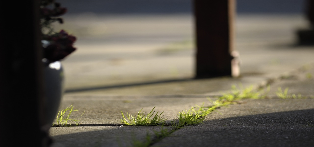 Découvrez les astuces naturelles pour désherber votre jardin, vos allées et votre terrasse