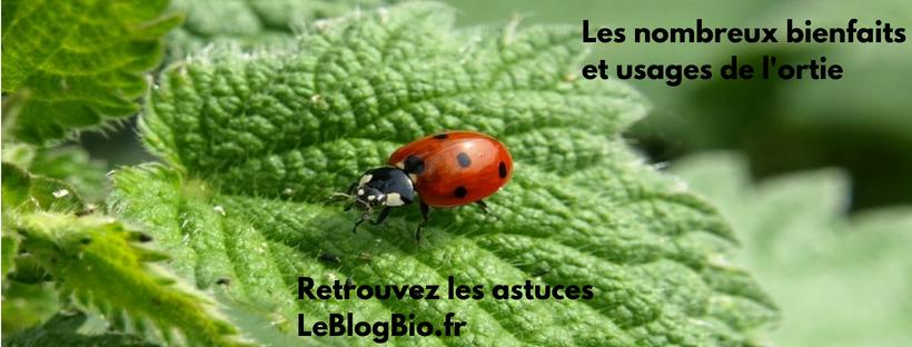 Les nombreux bienfaits et usages de l'ortie - #santé #bienetre #soin #tisane #zerodechet #antigaspi #bio LeBlogBio .fr