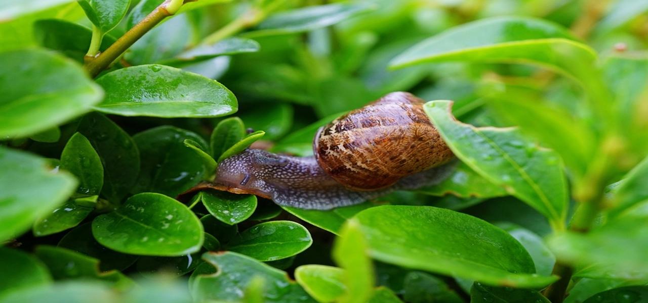 Astuces maison pour repousser escargots et limaces ; info permaculture à connaitre pour avoir un beau jardin et un potager productif