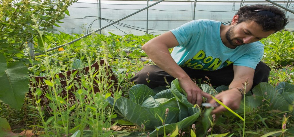 Avoir de bons légumes bios oui, mais solidaires avec ça ! Reseau Cocagne en partenariat avec LeBlogBio.fr #bio #jardin #association Crédits photos Olivia SINET
