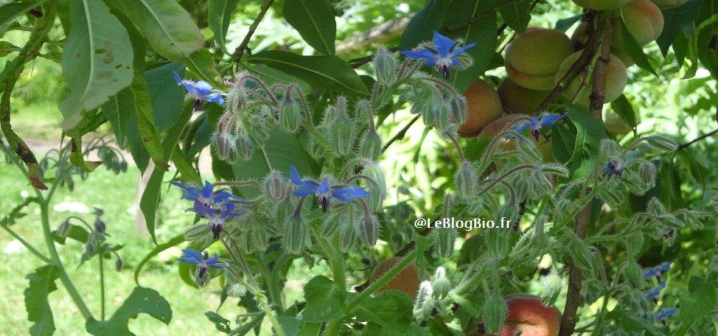 En juin, entretenez votre jardin et potager en suivant le calendrier Lunaire - organisation #jardin #lune #permaculture