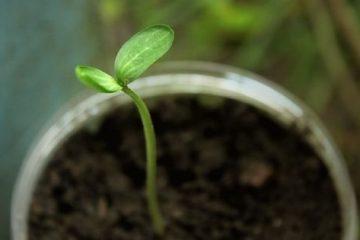Comment fabriquer des godets zéro déchet pour faire germer vos graines