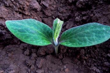 Jardiner en ville Retour d'expérience sur les jardins ouvriers